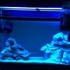 60cm水槽でマリンアクアリウム。いろんな海水魚を迎え入れました!