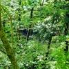 埋釜の池(青森県深浦)