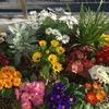 庭整備⑥〜早春の庭で寄せ植え!