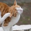 ギリシャの猫島、イドラ島を歩く