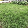 20201007時点での緑肥