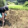 はじめての自然農のお米作り:田植え前の準備