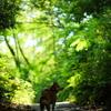 森へ迷い込む