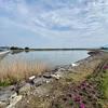 本村ため池(熊本県戸馳島)