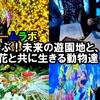 <動画UP>【teamLab】ステキ!楽しい♪「遊ぶ!未来の遊園地と、花と共に生きる動物達」in広島