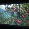 ■『奇跡のリンゴ』を観て。