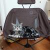 キャンプへの道・その2 ~椅子買っちった~
