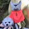 【和歌山】今年のお正月も、愛犬と一緒に慈尊院と丹生官省符神社へ(九度山町・御朱印)
