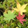 【紅葉ツーリング】紅葉名所ランキング全国3位!愛知県 香嵐渓 の写真と撮影スポット