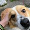 犬を飼いたい欲求を動画で抑えている