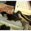 旅 東山動物園