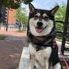 【犬のリード】フレキシ(flexi)ニューコンフォートを購入レビュー!【伸縮リード】