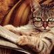 私の短編猫小説-4「あなたの家に猫がやってきた理由」