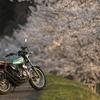 桜とバイクを撮りたくて