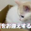 猫をお迎えする方法
