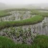 弥陀ヶ原湿原の池塘