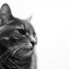 落下事故から約1ヶ月・・・猫の手術から数日後の術後の変化について
