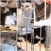 世界猫の日に、保護猫譲渡会に行ってきた話