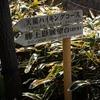 建長寺から勝上嶽展望台に登り相模湾を眺めちゃうお話を31枚の写真でお伝えします。