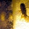 アートアクアリウム2020(京都・金魚の舞)はいつまで?