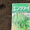 家庭菜園歴13年目にして初めて空芯菜を播種しました