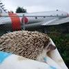 ハリネズミと飛行機1