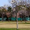 手賀沼公園付近の春の花々