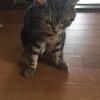 コロナ禍での海外移住⑬:猫のリンパ腫の治療方針