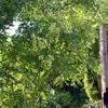 不思議な木の実