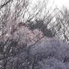 「記憶写真展」「日本の漆」