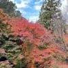 久々に生駒山「の麓」を散策してきました