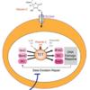 TET2とビタミンCのエピジェネティックな関係