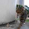 10月前半の #ねこ #cat #猫 その2