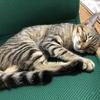 【猫ブログ】猫の睡眠とは・・・ 寝顔たくさん!