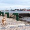 【愛犬と海散歩】〜贅沢な休日〜