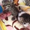 【保護猫】仔猫を病院へ連れていくまでの記録~準備したものリスト