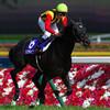【安田記念 2017 予想】絶対王者モーリス不在の今年の安田記念。制するのはどの馬か?