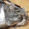 猫の周りであると便利なお掃除&猫毛対策グッズ