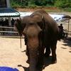 スリランカ旅行記⑥「象の孤児院とスリジャヤワルダナプラコッテ」