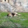 晴れの動物園