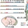 第1次元:人間のDNAの転写を参考にする④
