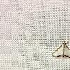 つぶやき 昆虫