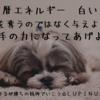 マヤ暦エネルギー 白い犬の13日間が始まるよ!(*^^*)