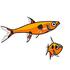 丈夫な小型魚、ラスボラ・ボララス等の飼い方とオススメ種を紹介します