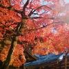 紅葉を見に行くなら、京都・高雄がオススメ!