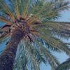 海外リゾートマニアがオススメするニューカレドニアのコアな魅力4選