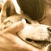 おばあちゃん犬こはるに教わった、始まる命と終わる命