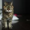 猫と認知症