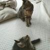 猫が来た!~初めての猫との暮らし、想像以上にハッピー♪