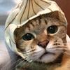 【猫ブログ】ポッキー ベロが・・・